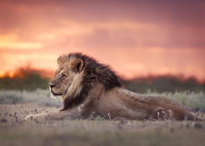 Kalahari March 2020