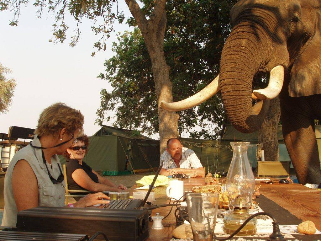 mwinilunga-mana-pools-elephant-at-table
