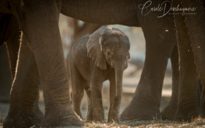 Baby elephant born in camp